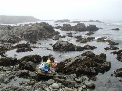 Tidepools 4 blocks from house.  Accessible @ beach access shown on map.