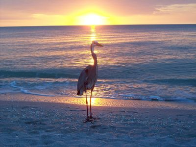 Captiva Island cottage rental - The Great Blue Heron