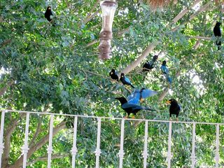 Playa del Carmen condo photo - Tropical birds visiting the balcony!