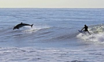 Dolphins and surfing :-)
