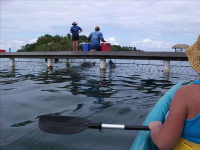 Kayak the REEF! Stop to watch the dolphins being trained, hear them talk & play!