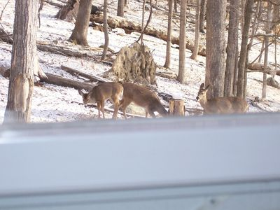 Picture of deer taken from kitchen window while crazing alongside of chalet.