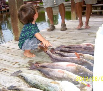 'Dad, that is red fish.I count 12 fish!!'