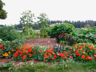Newberg house photo - Bella Vista Organic Garden, Help yourself to the fruits and veggies :)