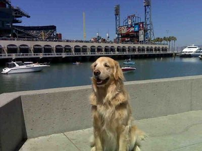 Daily walk to McCovey Cove at  ATT Ball Park..Go Giants!!