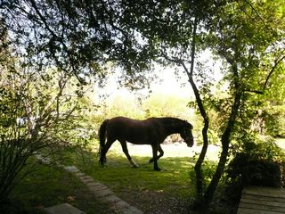 Three Rivers farmhouse photo - Bayboy, the American Mustang strolls beneath the dappled light