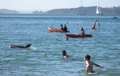 Swim with Dolphins and watch passing Orca whales