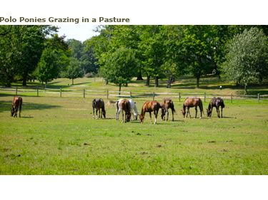 horse farm across the street
