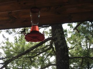 Ely cabin photo - hummingbirds feeding on Wildloon porch