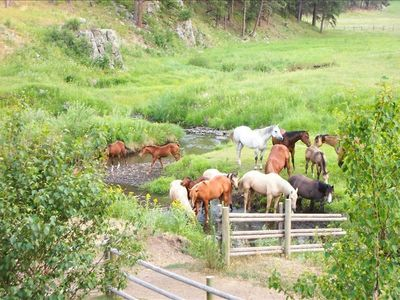 Horses grazing in the pasture along Spring Creek.