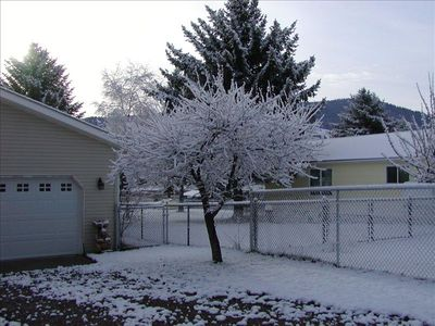 Winter cherry tree