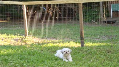 Security of fencing modeled by Rosie. If anyone can escape - she can!!