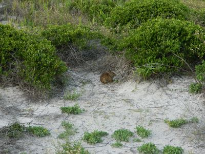 some of our wildlife. A dune bunny
