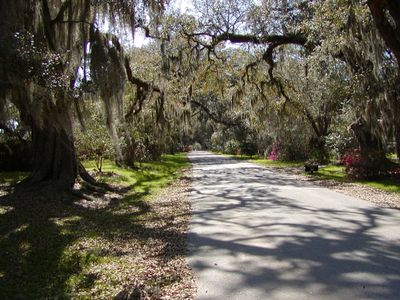 Seabrook Island maritime forest is pure Paradise!