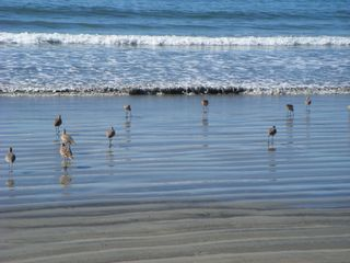 A beautiful morning on the beach. - Coronado condo vacation rental photo