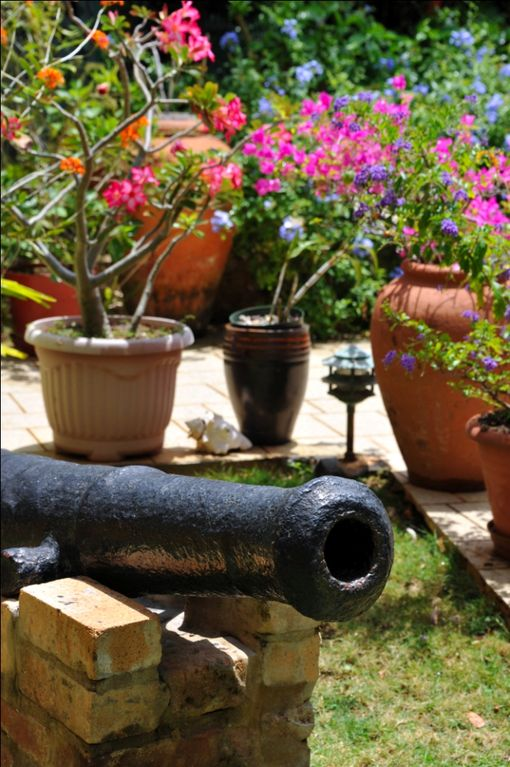 Cannon in the garden