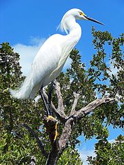 Key Largo cottage photo - See the wonderful tropical wildlife from our place...