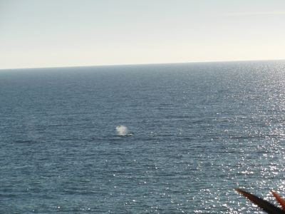 From Casa Bella - See the Earths Curvature & Migrating Humpback Whales Spouting!