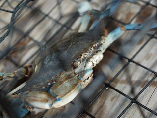 Annapolis cottage photo - Catch Blue Crabs off the pier!