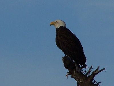 Ocean Shores is a wildlife refuge. Bald Eagles often seen on beach near cabin.