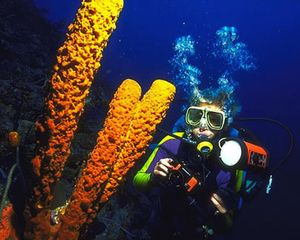 Aguadilla house photo - Enjoy Scuba Diving and Snorkeling