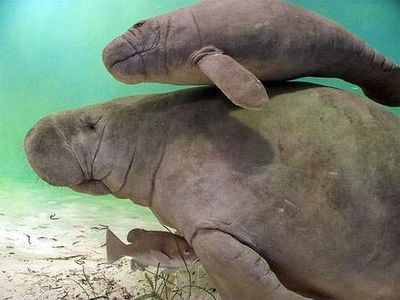 Manatees& Dolphins  all around our area. see for yourself.