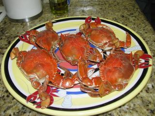 Port St. Joe cottage photo - Yum!!!!