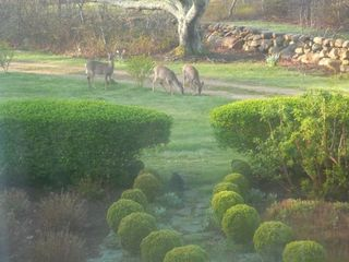 Chilmark house photo - You could have a neighborhood visitor or three...
