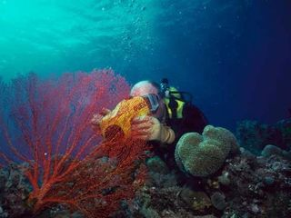 Marathon house photo - Scuba Dive on a Living Coral Reef, Just Offshore