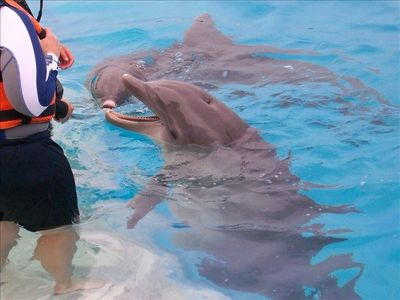 Swim and play with the Dolphins at Sea Life Park....Only 20 minutes away!