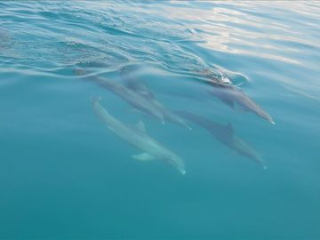 Met these dolphins on a snorkel adventure.
