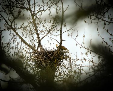 EAGLE NEST ON PROPERTY