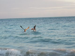 Punta Cana condo photo - Pelicans Fishing