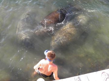 See them up close! Manatees frequently visit us right on our docks...