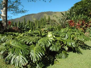 Wood Valley Pahala cottage photo - Wood Valley is Hawaii's best kept secrets!