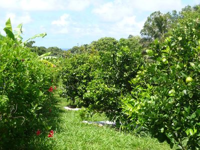 Organic Fruit Orchard joins the Cottage on lush Acreage.