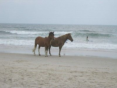 Assateague Island National Seashore is a 25 minute drive away