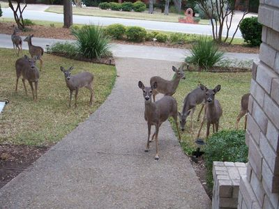 Looking out the front door at our frequent visitors