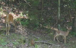 Ellijay cabin photo - Enjoy Watching the Wildlife While Having Your Morning Coffee