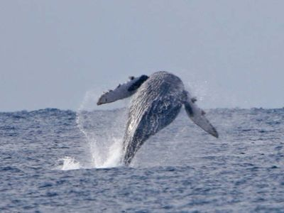 Watch migrating whales from the back patio