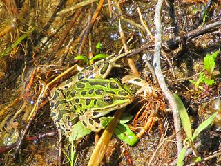 Shakopee cottage photo - Island Froggy