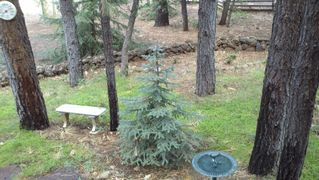 Pinetop cabin photo - Front Garden