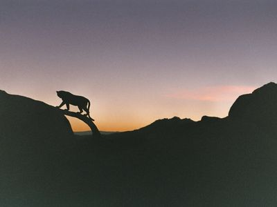 Statue of Mountain Lion against a sunset.. above the house on a look out