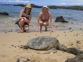 Kailua Kona house photo - You can easily find turtles sunning on the more secluded beaches.