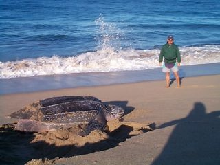Todos Santos house photo - Sea Turtle Sightings!