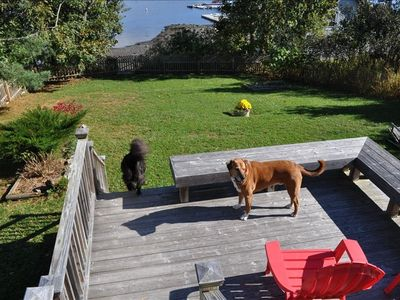 More Decks & Fenced In Yard, with Our Dogs Playing