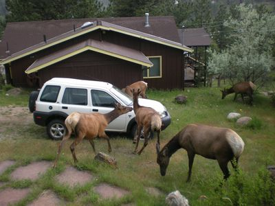 Lot's of Elk visiting us.