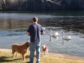 If you are lucky, you can feed the swans :-)