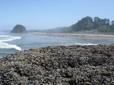 There is nothing like a summer day in Neskowin. Lots of tidepools and long walks