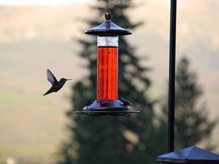 Breckenridge house photo - Humming bird.